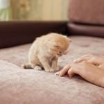 Animales domésticos en Comunidades de Propietarios II